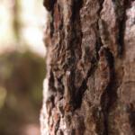 """Tree"" by Emery Reimann of Brinnon"