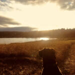 My Dog by Will Hiegel of Port Townsend