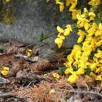 Bird by Mara Christensen - Port Hadlock